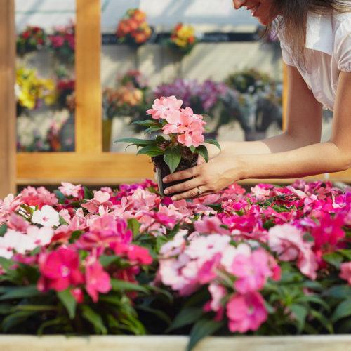 fiori-piante-zannoni